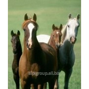 Премикс П 72-1 для лошадей Хорс 1% фото