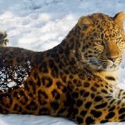 Охота в Африке в дельте реки Акаванго и пустыни Калахари