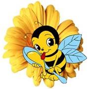 Куплю оптом мед пчелиный натуральный фото