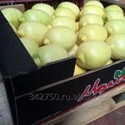 Лимоны сорт Интердонато фото