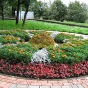 Проектирование, посадка цветников Черкассы,Проектирование, посадка цветников Киев, Проектирование, посадка цветников Украина фото