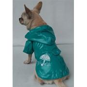 Одежда для животных из США. фото