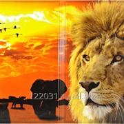 Обложки для паспорта из ПВХ с нанесенным заламинированным изображением. фото