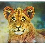 Коврик для мыши Buro пластиковый, 230*180*2 мм, Лев фото