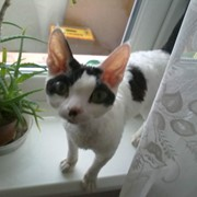 Стрижка котів у Львові фото