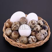 Яйца перепелиные оптом купить в Мариуполе фото