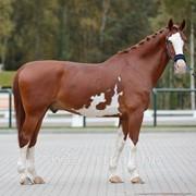 Horse фото