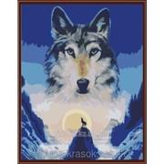 Картина по номерам Образ волка фото