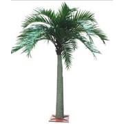 Пальмовые деревья декоративные фото