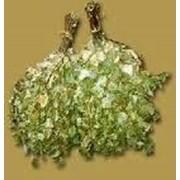 Сборные березовые веники с целебными растениями фото