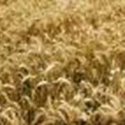 Хранение зерна. Полный комплекс услуг элеватора. фото