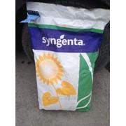 Семена гибридного подсолнечника НК Роки фото