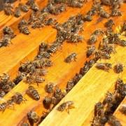 Пчелопакеты карпатской породы 3+1 фото