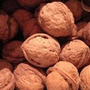 Орехи в Молдове ,закупка фото