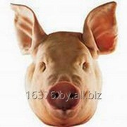 Головы свиные (с ушами) фото