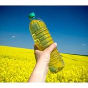 Рапс, рапс в Казахстане, купить рапс в Казахстане, заказать рапсовое сырьё в Казахстане, рапс на экспорт, фото