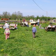 Дневной конный лагерь фото