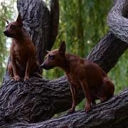 Дрессировка собак в Одессе фото