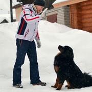 Дрессировка собак любых пород фото