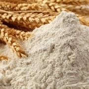Мука пшеничная второго и первых сортов фото