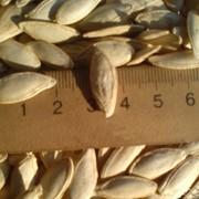 """Семена тыквы """"Дамский ноготь"""" (Болгарка),тыквенные семечки, семена тыквы, Украина, Экспорт. фото"""