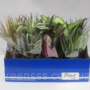 Комнатные растения микс 12 сортов -- Indoor plants mixed 12 srt. фото