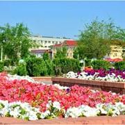 Саженцы, цветы фото