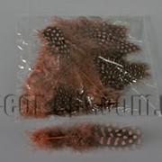 Перья коричневые с горохом 5-10 см ~50 шт 570400 фото