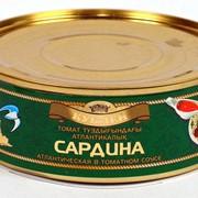 Сардина атлантическая в томатном соусе фото