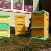 Ульи пчелиные в Минске фото