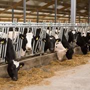Бизнес план молочной товарной фермы фото
