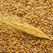 Оборудование для хранения зерна,Предварительная и элеваторная очистка зерна фото