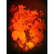 Голограмма художественная Лилии с хризантемами фото