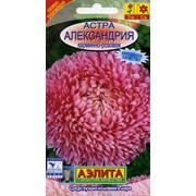 Семена цветов Астра Александрия карминно-розовая фото