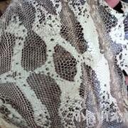 Лоскуты кожи игуаны фото