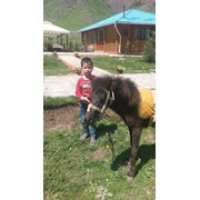 Катание на лошадях, прогулка на лошадях, иппотерапия, конные прогулки фото