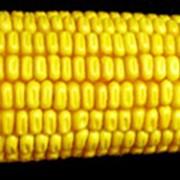 Семенная кукуруза ЛюбаваF1 фото
