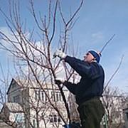 Садовник в г. Николаев фото
