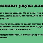 Дезинсекция Уничтожение Клопов фото