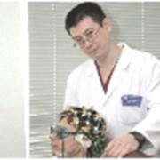 Электроэнцефалография (ЭЭГ) фото