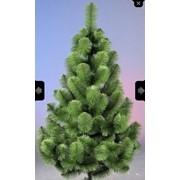 Сосна Зеленая 1,8 м фото