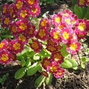 Организация цветников фото