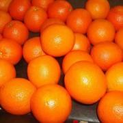 Апельсины, Фрукты цитрусовые, Апельстны оптом в Астане фото