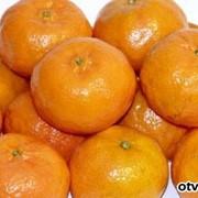 Мандарины, Фрукты цитрусовые, Мандарины в Астане оптом фото
