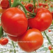 Семена томатов Старбак F1 фото