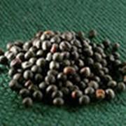 Семена озимого рапса фото