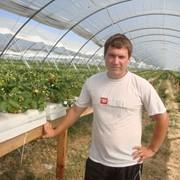 Консультационные услуги по технологиям выращивания земляники. фото
