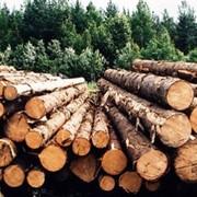 Заготовки леса фото
