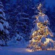 Зимние каникулы в Закопане фото