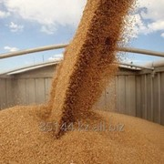 Зерновые культуры. Экспорт от 1000тн. Качество. Документы. фото